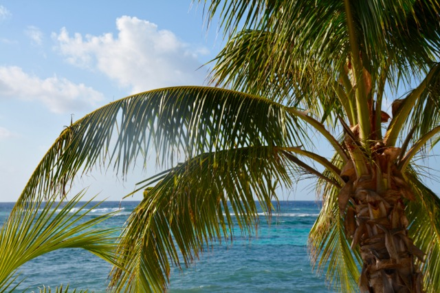 Beauty of Grand Cayman | Cayman Islands | www.drnicolemeastman.com